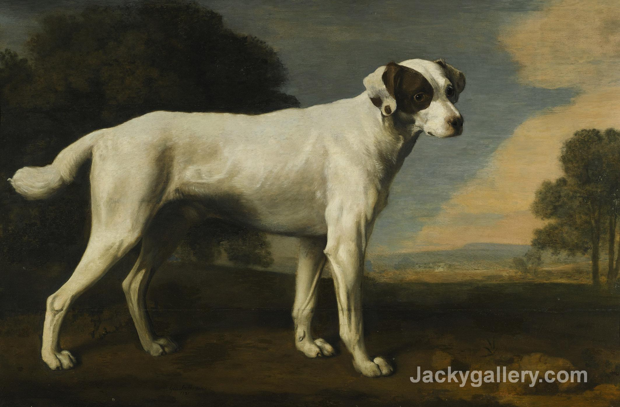 Viscount Gormanstons White Dog by George Stubbs paintings reproduction